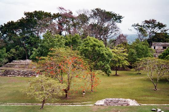 Pyramiden in Palenque Mexico