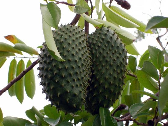 Stinkfrucht aus Mexiko - Lecker?