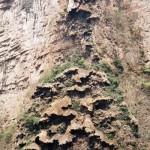 Sumidero Canyon (1)