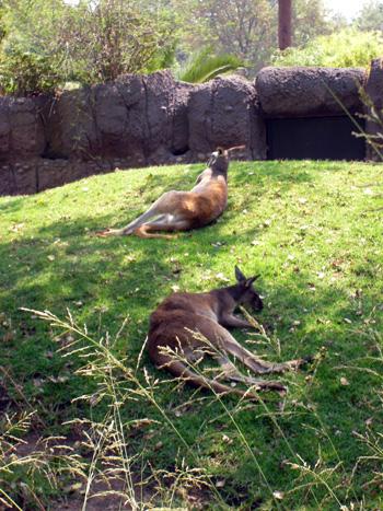 Zoo im Chapultepec Park (Mexiko)
