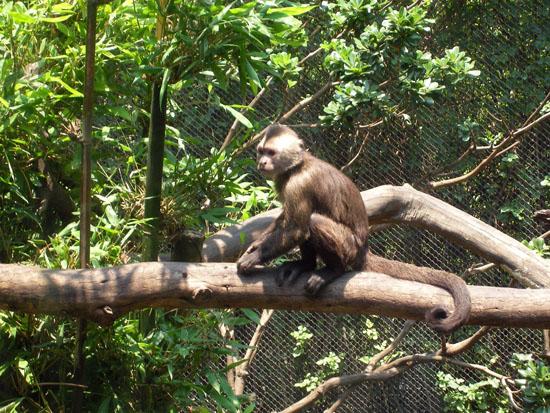 Zoo im Chapultepec Mexiko